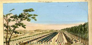 sablon pomme de terre protection