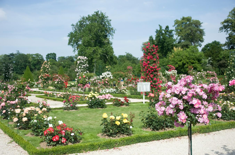 botanique-roses-parc-bagatelle